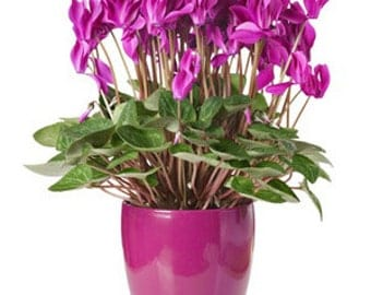 Plants of the Month Club/39.99 per month