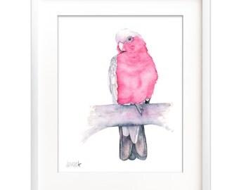 Galah print, galah watercolor painting, Galah downloadable print, parrot printable, parrot diy print, galah printable, instant download