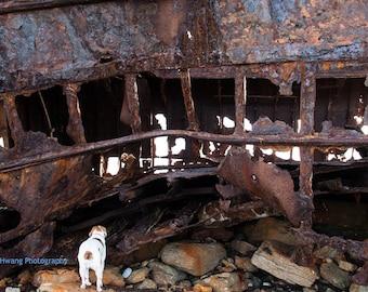 Plassey Shipwreck on Inis Oirr, Ireland, Deconstruction Photography, Dog Photography