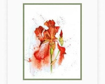Iris painting, watercolour print, Flower painting, Red Iris picture, Iris watercolor, red wall art, Iris flower, floral art