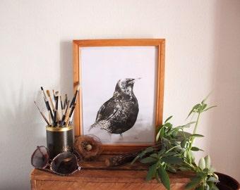 Bird Starling Watercolour illustration