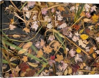 Vermont: Fallen Leaves