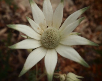 White flower print photo photography fine art abstract square