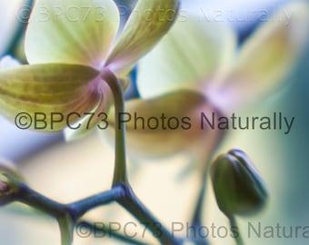 Orchid #1 - Print 4x6, 8x12, 12x18, or 16x24 Fine Art Print