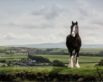 Monty with Pembrokeshire Backdrop,  Fine Art Print, Equine Photography