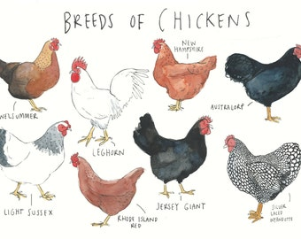 Breeds of Chickens Greetings Card