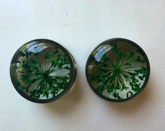 Queen Ann's Lace plugs