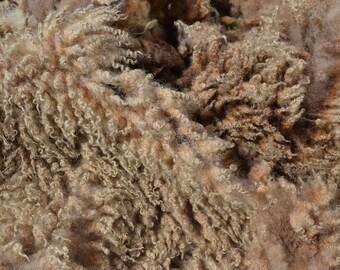 Shetland Sheep Fleece 1 kg