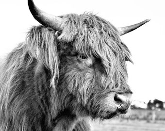 Hairy Cow Photograph - Highland Cattle