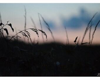 grass in  the sunshine