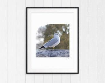 Seagull, Coastal Beach Decor, Nautical Wall Art Print, Driftwood, Instant Digital Download, Modern Minimalist, Cottage Art, Ocean Home Decor