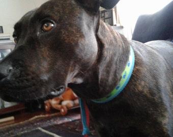 Large Dog Collar