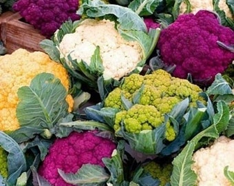 Rainbow Cauliflower 20 Seeds - Tasty, Colouful  and Unusual