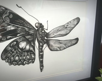 The butterfly and the dragonfly Black ink print drawing artwork picture