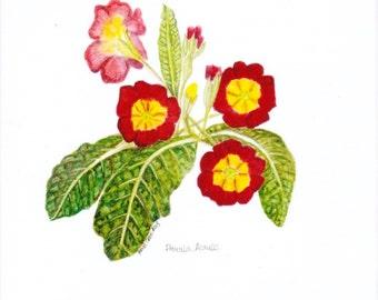 Primula Acaulis, Primula. Botanical greetings card left blank for your message.