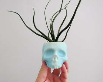 Skull Planter - Turquoise Blue - perfect for cactus succulent or air plant