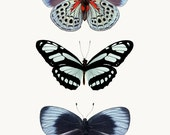 Insect Print, Blue Butterfly Print, Insect Art, Nature Photography, Large Wall Art Print, Butterfly Art Print, Butterfly Wall Art Print