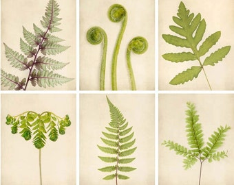 Fern Prints, Botanical Prints, Green Art, Nature Photography Set, Fern Art, Nature Artwork, Fern Wall Art, Photo Set, Set of 6 Prints
