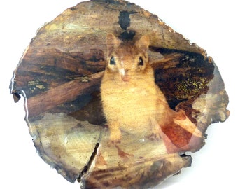 Red Squirrel on Natural Log Slice from my Forest.  My original Red Squirrel Photograph on Log Slice.  Handmade By Me.