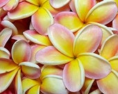 16 oz Hawaiian Lei Flowers Fragrance Oil for making soap and candles