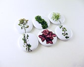 6 Garden Fridge Magnets, wine charms, pin back buttons, plants, ivy, green leaves, kitchen decor, bottle cap, keychain 1242