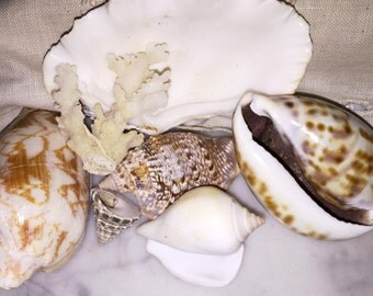 Vintage Sea Shells