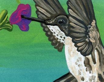 ACEO Hummingbird Wildlife Bird Original Painting Art-Carla Smale
