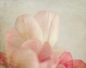 Tulip Art,  Abstract Photography, Floral Art Print,  Tulip Wall Art, Fine Art Photography, Bedroom Decor