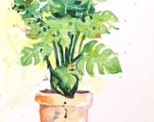 original botanical illustration of a monstera plant