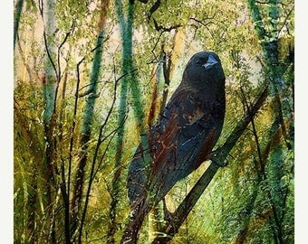 On Sale Giclee Archival Print, Photomontage, Collage, Painted Photographs, The Return of the Nightingale