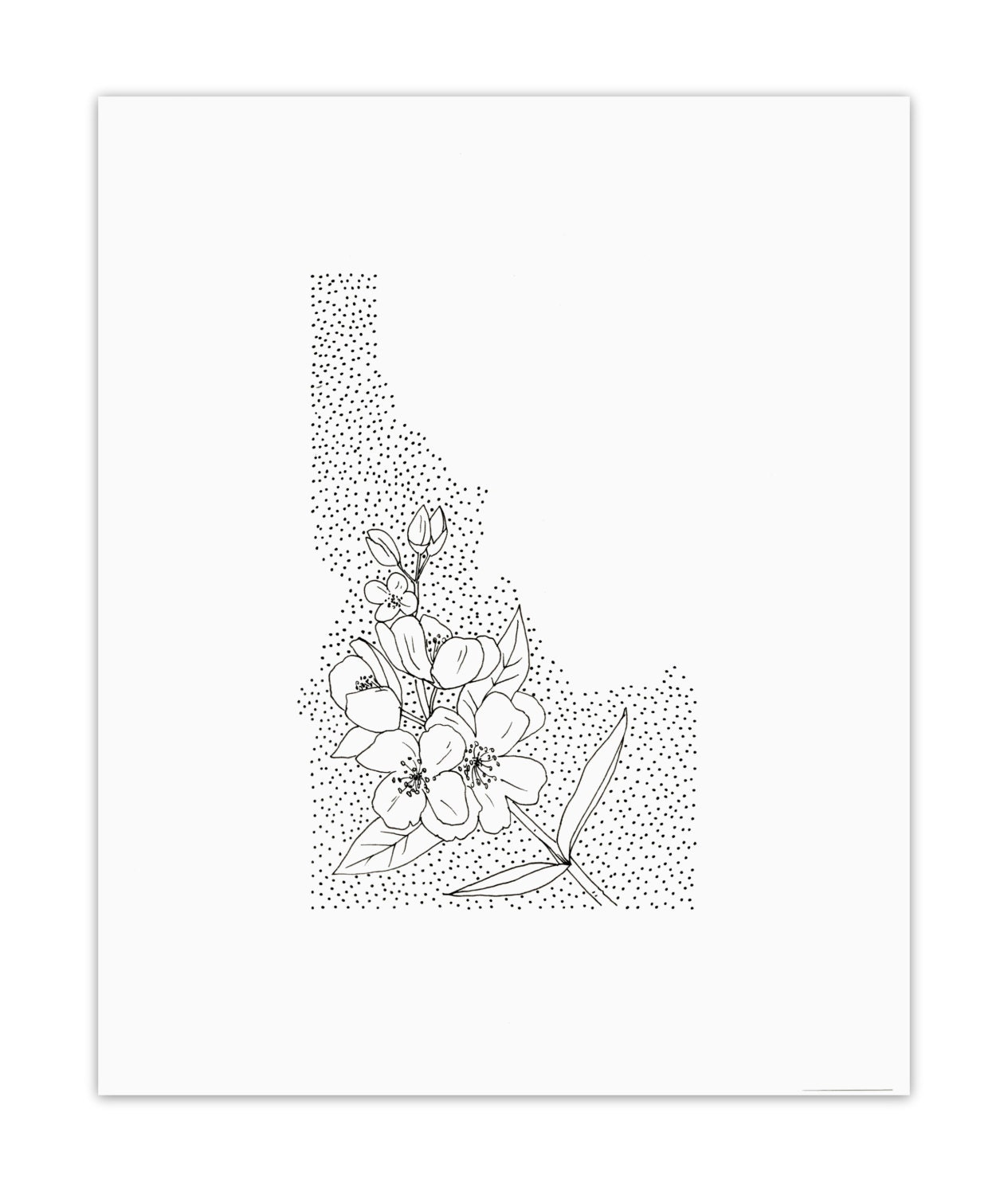 Idaho Syringa State Flower Drawing Giclee Print
