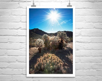 Desert Photography, Cactus Print, Nature Photography, Arizona Picture, Tucson Art, Southwestern Art, Cactus Art, Sunsets, Desert Landscape