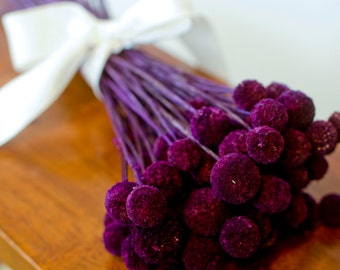 Bunch of Merlot Craspedia, purple Billy Balls, purple billy Buttons, purple dried decor, modern decor, modern wedding, wedding decor