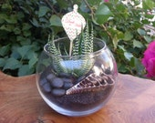 Low Light Haworthia Fasciata Zebra Succulent Plant Tabletop Terrarium, FREE Message Tag Included