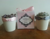 12 Succulent Favors and Boxes, Personalized Label, Bridal Shower, Wedding, Baptism, Baby Shower