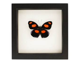 Butterfly Shadowbox Stoplight Catone