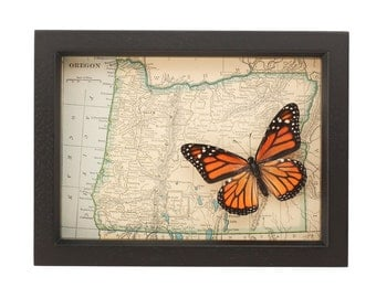 Antique Framed Map of Oregon State with real Monarch Butterfly
