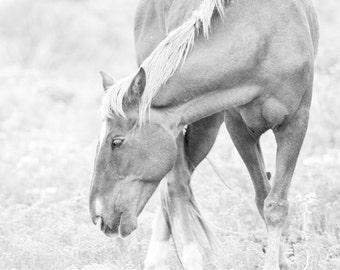 Horse Photograph - 11x14 Black and White Horse Fine Art Print