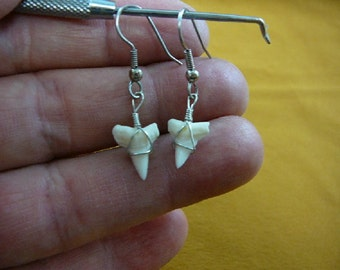 5/8 inch white Modern Bull Shark Tooth Teeth dangle earrings silver wired JEWELRY S802-12
