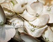 For Kelli ONLY - Sepia Hydrangea Blossoms - Set of 3 - Fine Art Photography Prints