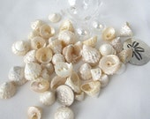 "Beach Decor Seashells - Nautical Decor Sea Shells - Small Pearl Astrea Turban Shells - Beach Wedding Shells  .5 to 1.25"" - 24PC"