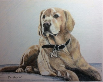 Custom pet portrait colored pencil 11x14 original