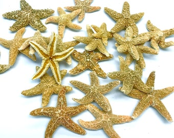 "Starfish - Grade B Sugar Starfish 1.5""-2.5"" Set of 10 - Beach Decor Star Fish Bulk Beach Wedding Coastal Nautical Real Starfish"