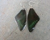 Peacock Butterfly wing Earrings, Real Insect Jewelry, Large Big Statement, Bohemian Jewelry, BW001