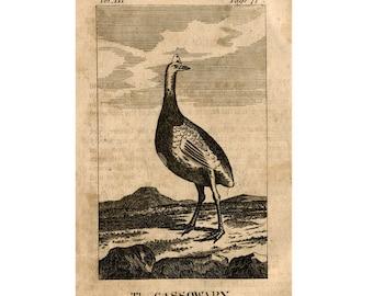 1808 ANTIQUE CASSOWARY ENGRAVING original antique bird engraving print