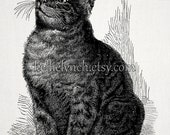 Vintage Cat Illustration Tabby With Bug - Instant Download Image for Embellishment, Transfer, Print - Commercial Use - 0004