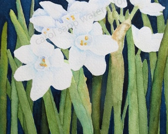"paperwhites flower painting archival print 5"" x 7"" of original watercolor"