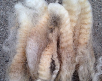 Blue faced leicester, BFL, raw wool white 4 ouncee