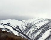 Nature Photography, Winter Landscape, Mountainside, Snow, Snow White, Charcoal, Russet, Pale Grey - Treeline