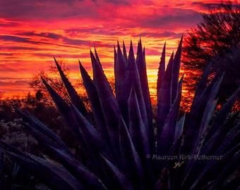 Large sunset photograph, 16 x 20, Arizona sunset photo, blue agave, red orange sunset, southwestern decor, AZ landscape art, vivid sunset